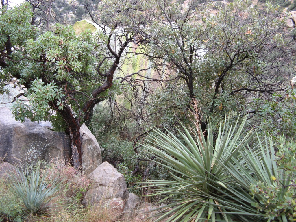Cochise Stronghold Flora
